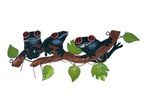 3 Red eye frogs